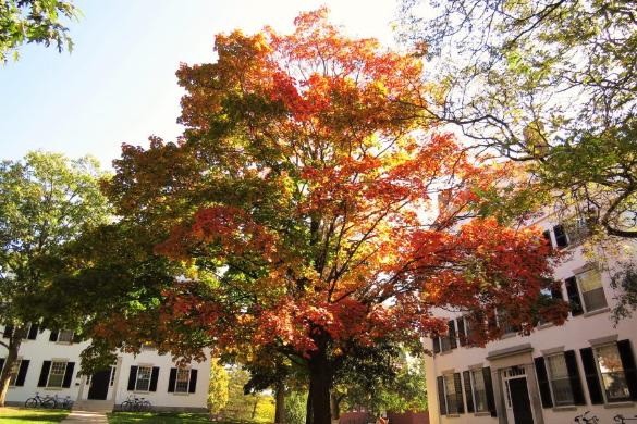 全米の中でも指折りの美しさをもつダートマスの秋。今年はどんな個性的な学生たちを迎え入れたのだろうか 写真提供:麓えり
